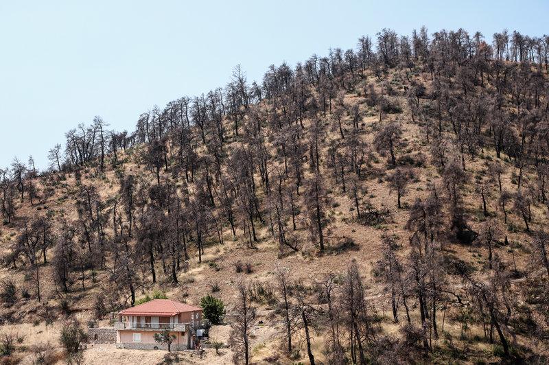 Καμένα στρέμματα στο δάσος της Εύβοιας