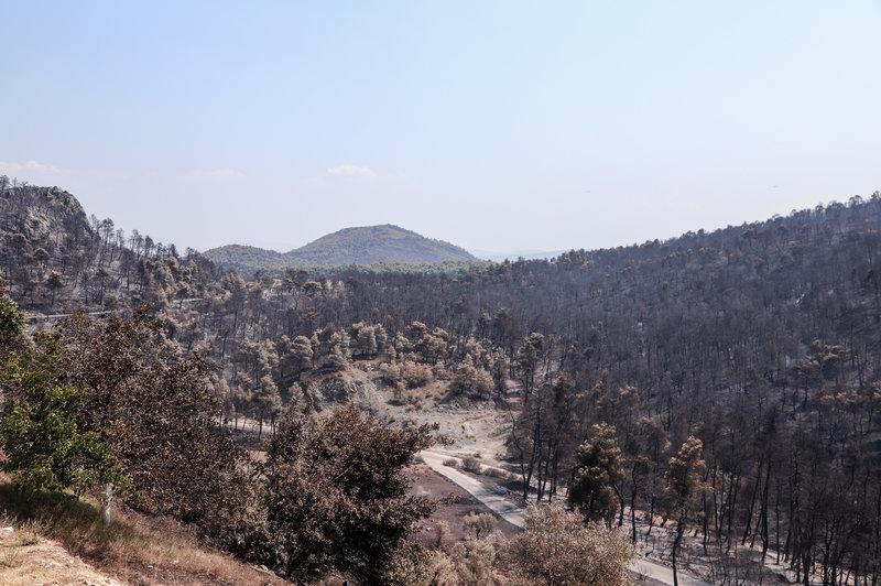Καμένα στερέματα στο δάσος της Εύβοιας