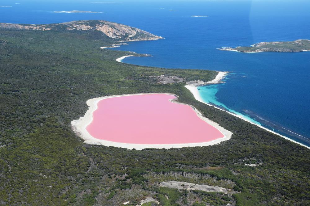 Η λίμνη Hillier στην Αυστραλία με το ροζ νερό. Οι επιστήμονες πιστεύουν ότι οφείλεται σε βακτήρια στις αποθέσεις αλατιού