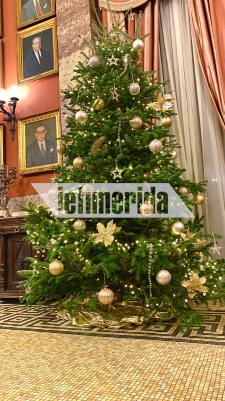 Η προμήθεια των φυσικών  χριστουγεννιάτικων δέντρων έγινε από την ιδιαίτερη πατρίδα του Κ. Τασούλα, τα Γιάννενα.