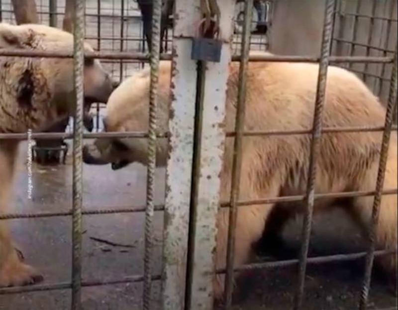 Οι υπεύθυνοι του ξενώνα με τον μίνι ζωολογικό κήπο σκότωσαν τις δύο αρκούδες που κατασπάραξαν τον 11χρονο