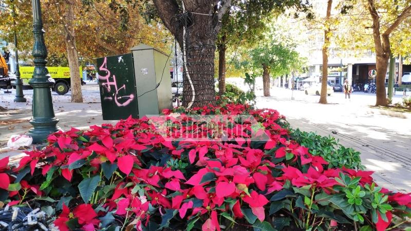 Τοποθετήθηκε το χριστουγεννιάτικο δέντρο στην πλατεία Συντάγματος