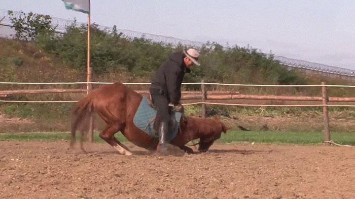 Μια άρνηση για οποιαδήποτε δουλειά έχει αυτό το άλογο - Μόλις κάποιος το καβαλήσει, πέφτει στο έδαφος και παριστάνει τον ψόφιο