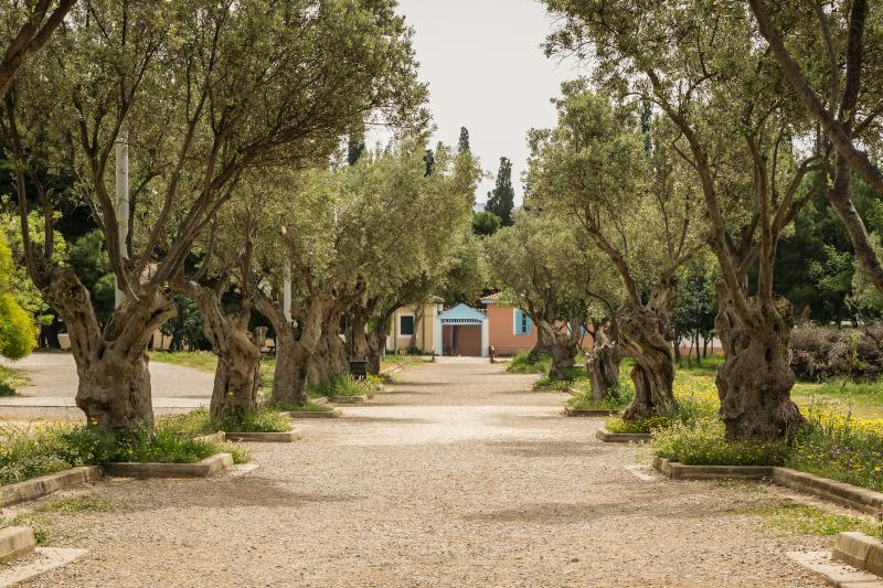 5+1 πάρκα εντός των τειχών της Αττικής για μια ανάσα πράσινου και βόλτα με αποστάσεις