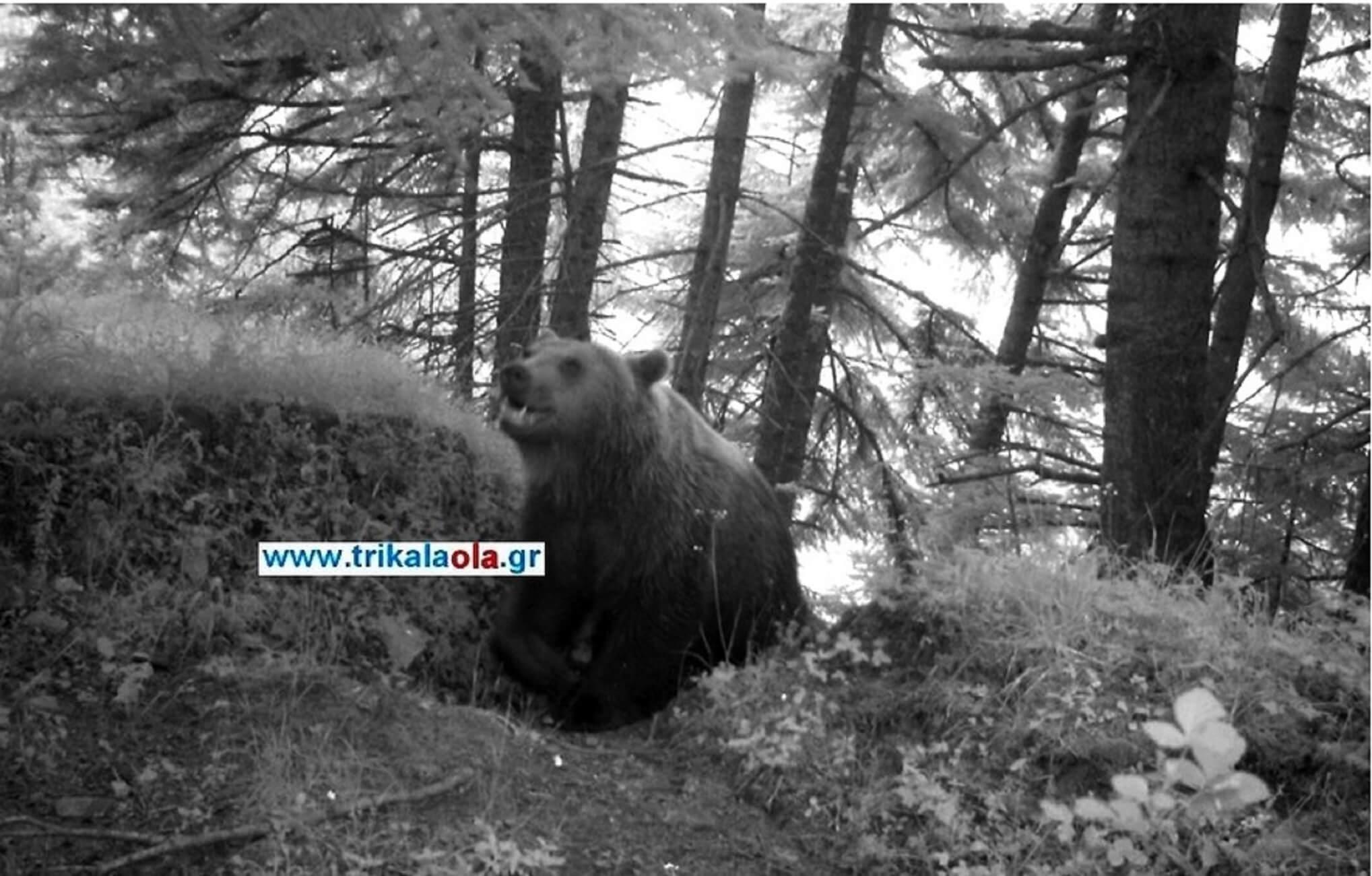 Η αρκούδα στο Νεραϊδοχώρι Τρικάλων