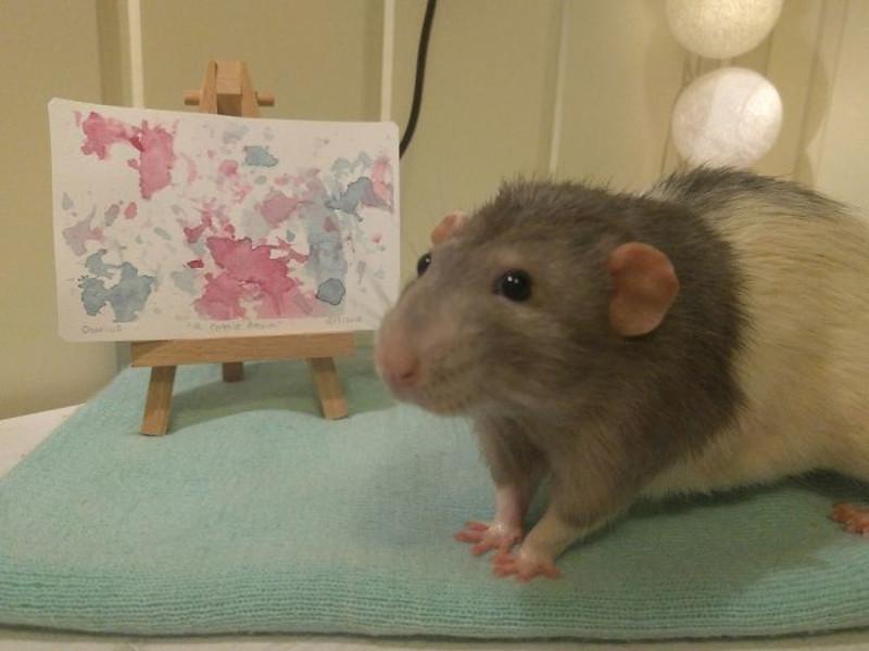 Αρουραίος μπροστά σε πίνακά του