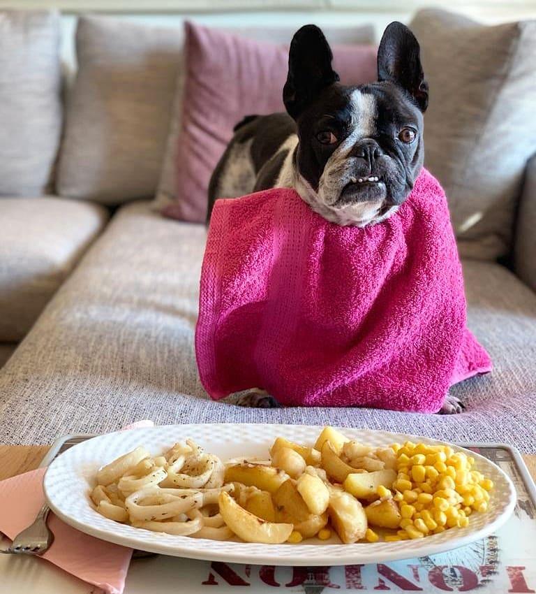 γαλλικό bulldog ο σκύλος της Ιωάννας Μαλέσκου