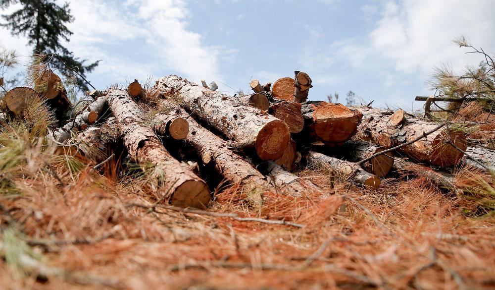 Στην υλοτόμηση εκατοντάδων δέντρων που ξεράθηκαν προχώρησε το δασαρχείο Θεσσαλονίκης