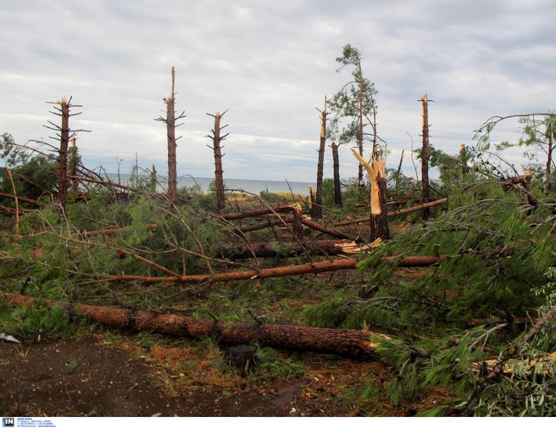 Πεσμένα δέντρα