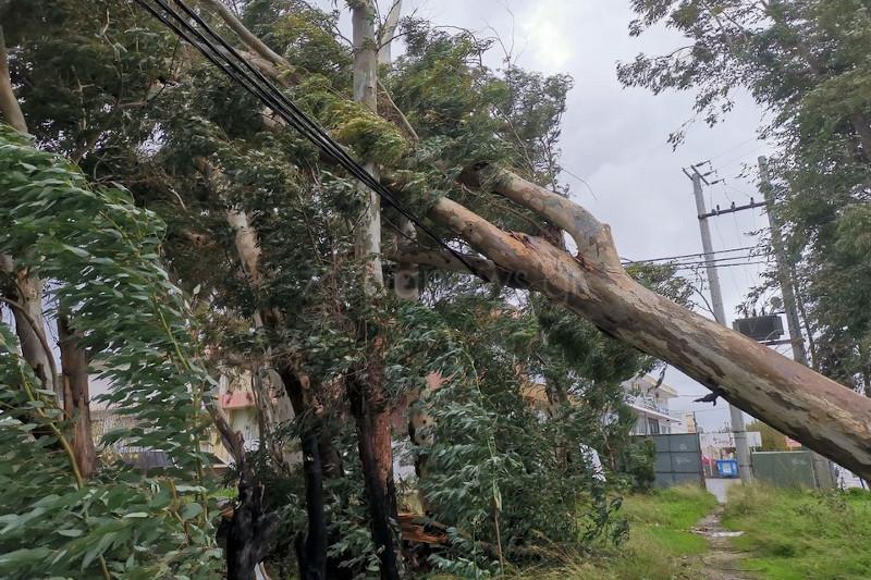 Δέντρο έπεσε από τους ανέμους