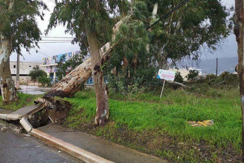 Πεσμένο δέντρο από τους ανέμους