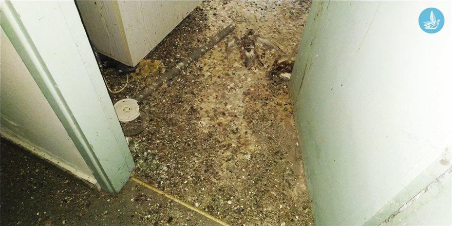 Νεκρό περιστέρι στην είσοδο της κουζίνας στο πρώην δημαρχείο Ιαλυσού.