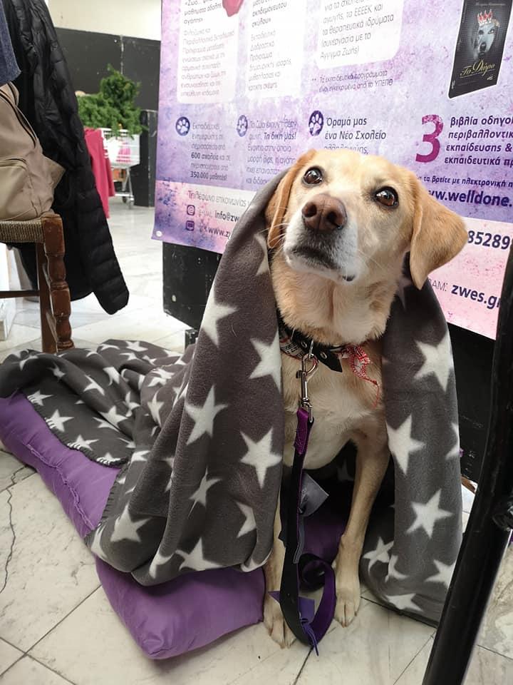 Η Διώνη είναι η σκυλίτσα που ενέπνευσε ένα ολόκληρο εκπαιδευτικό σύστημα που φέρνει σε επαφή ζώα και παιδιά στα σχολεία