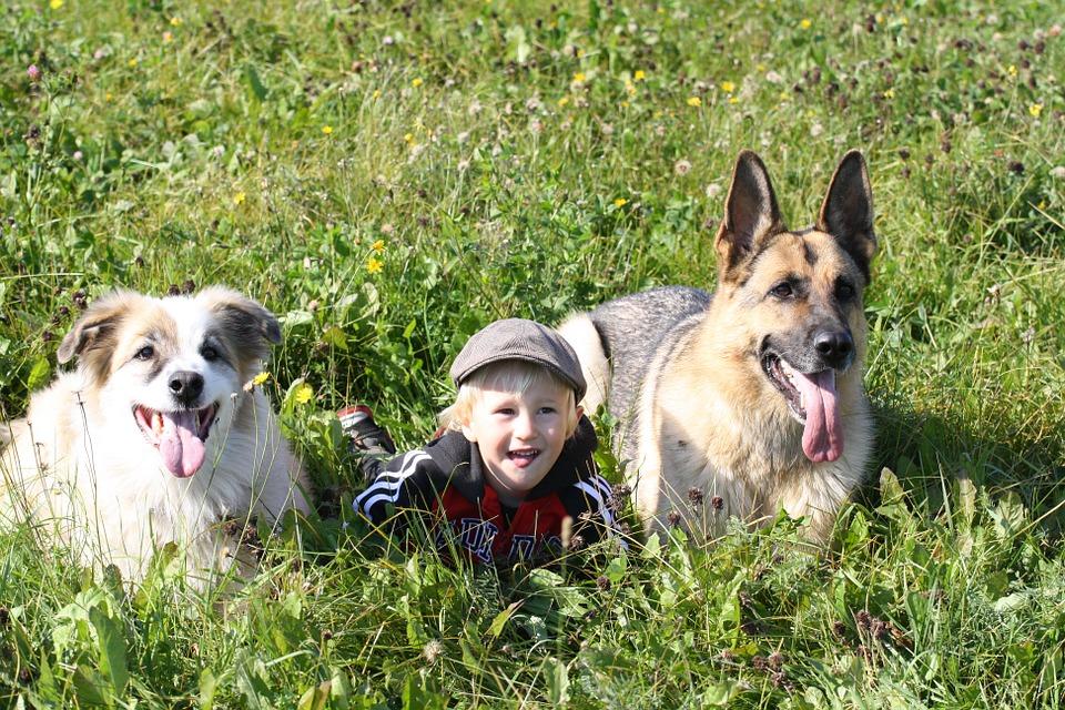 Παιδί με σκυλιά στο γρασίδι