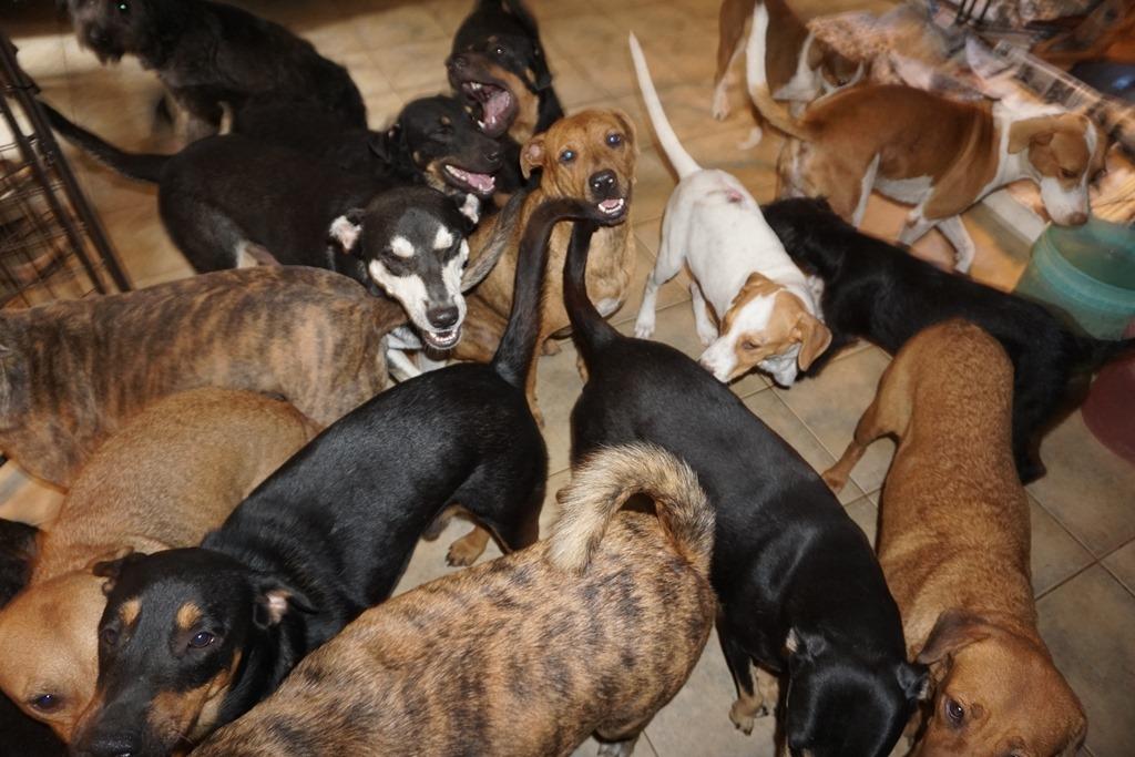 Τα σκυλιά έχουν κάνει κατάληψη σε όλο το σπίτι της