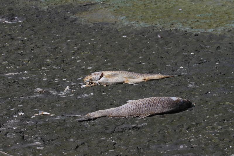 Νεκρά ψάρια