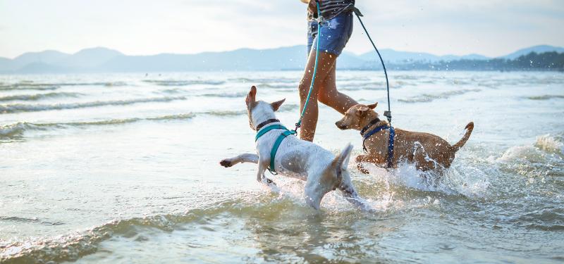 Δυο σκύλοι στη θαλασσα