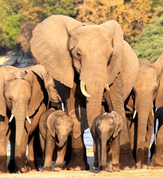 Το ζευγάρι δημοσίευσε χθες νέες φωτογραφίες από το ταξίδι του στην Μποτσουάνα με αφορμή της Παγκόσμια Ημέρα Ελέφαντα