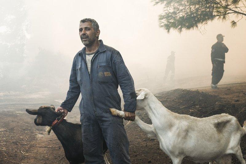 Κάτοικος της Εύβοιας προσπαθεί να απομακρύνει τα οικόσιτα ζώα του