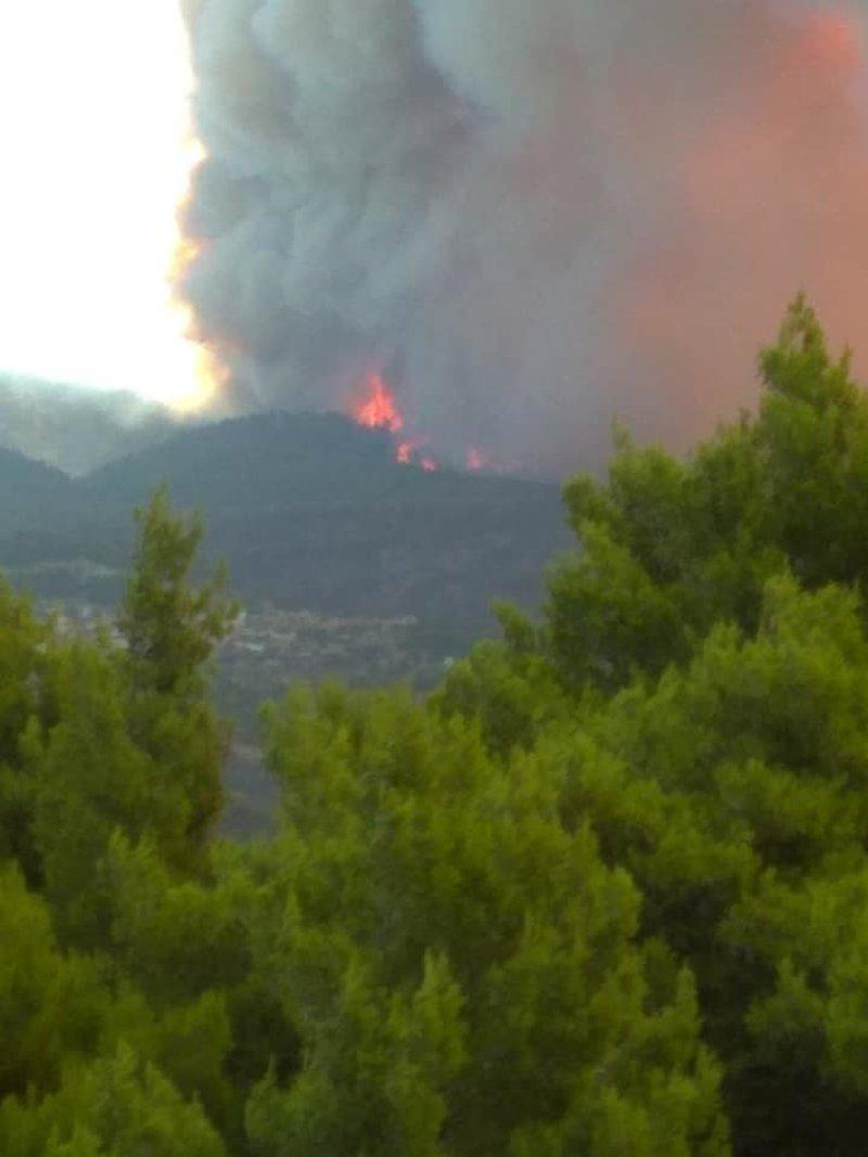Φωτιά σε δάσος