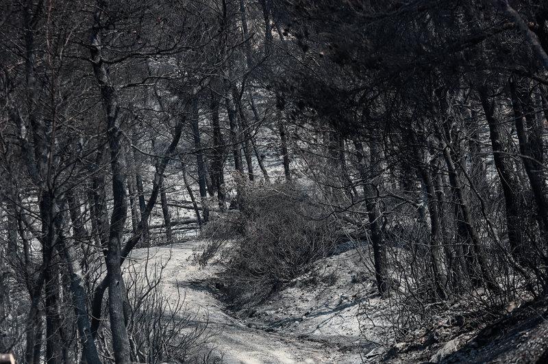 Στάχτη παρθένα δάση από την πυρκαγιά στη Εύβοια