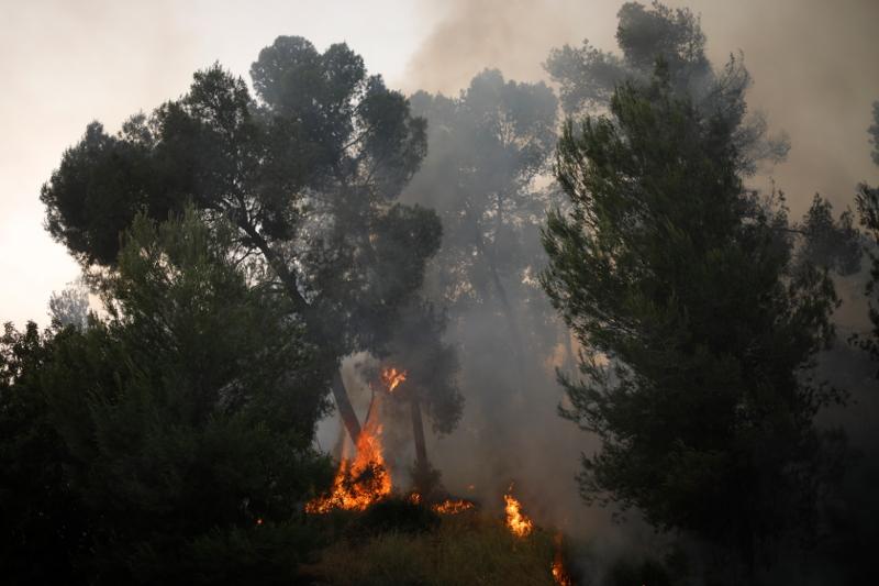 Δέντρα καίγονται από τη φωτιά στο Ισραήλ