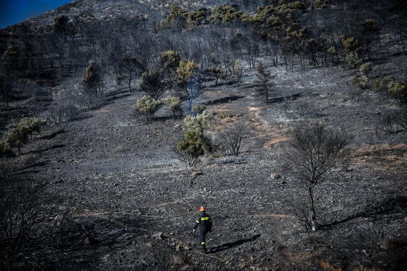 Το δάσος της Παιανίας έχει καεί
