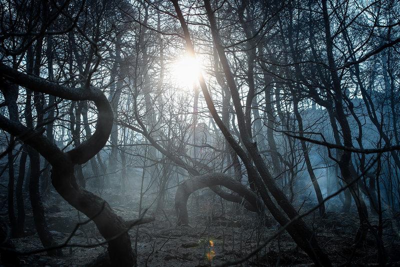 Τεράστια οικολογική καταστροφή στο παρθένο δάσος