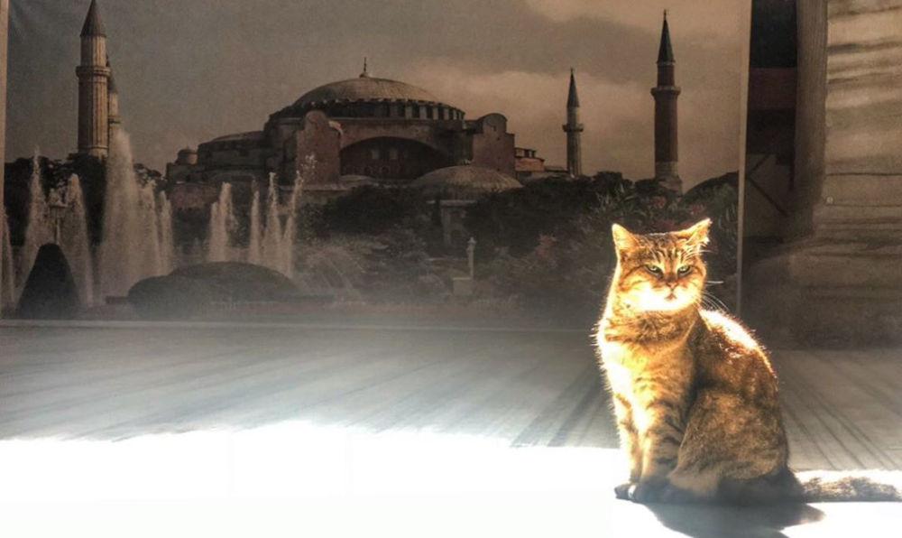 hagiasophiacatΗ Γκλι έγινε διάσημη σε όλο τον κόσμο, ως η γάτα της Αγιάς Σοφιάς / Φωτογραφία: Instagram / @hagiasophiacat