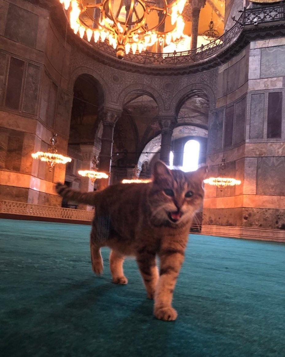 Η γάτα της Αγιάς Σοφιάς κυκλοφορούσε μέσα στο ναό
