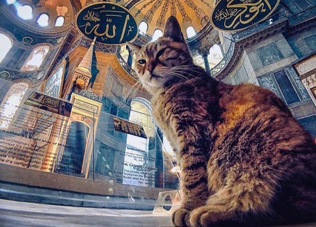 Η γάτα που ζει εδώ και πάνω από μία δεκαετία στην Αγιά Σοφιά