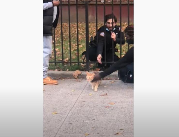 Γάτα διάσωση αστυνομικοί
