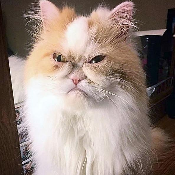 Αυτός είναι ο Λούις, η γάτα που θέλει να κατακτήσει τον τίτλο της Grumpy Cat