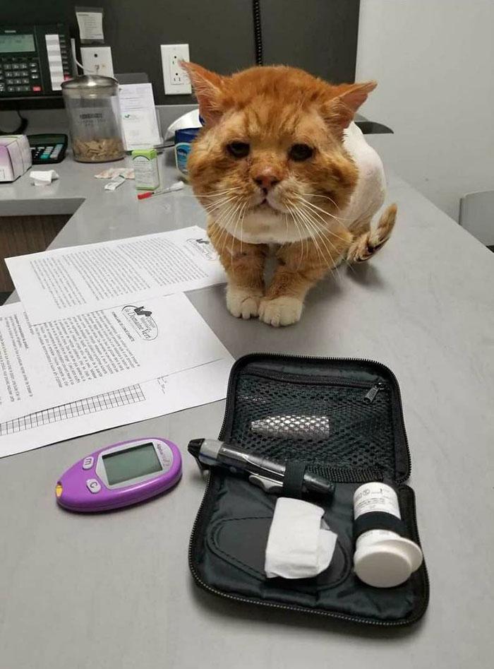 Η γάτα είχε κρυοπαγήματα, ψύλλους, δερματική αλλεργία και πολλά ακόμη προβλήματα υγείας