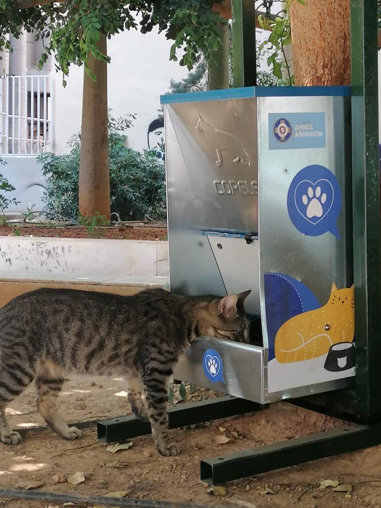 γατα τρωει