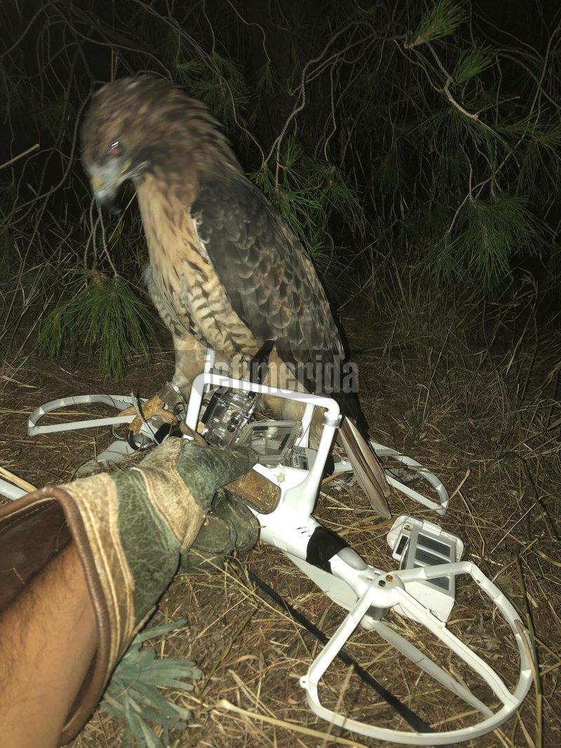 Γεράκι με drone στο πόδι