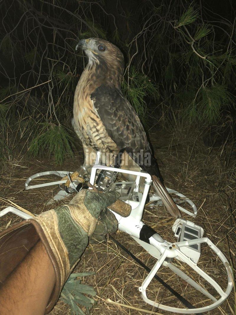 Γεράκι κατέρριψε drone