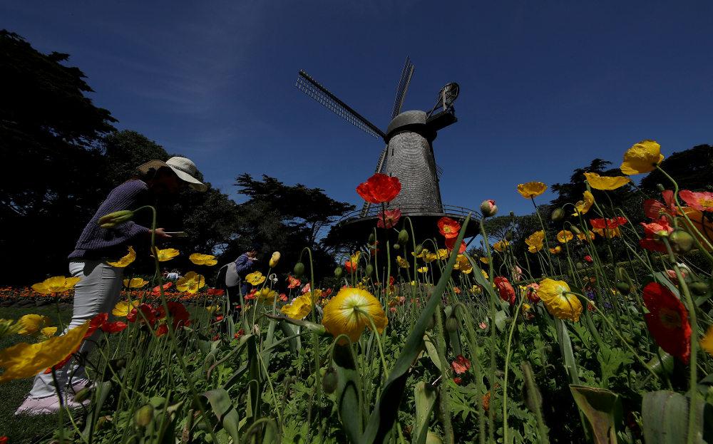Το καταπράσινο πάρκο του Σαν Φρανσίσκο, ένα από τα πιο εντυπωσιακά στον κόσμο