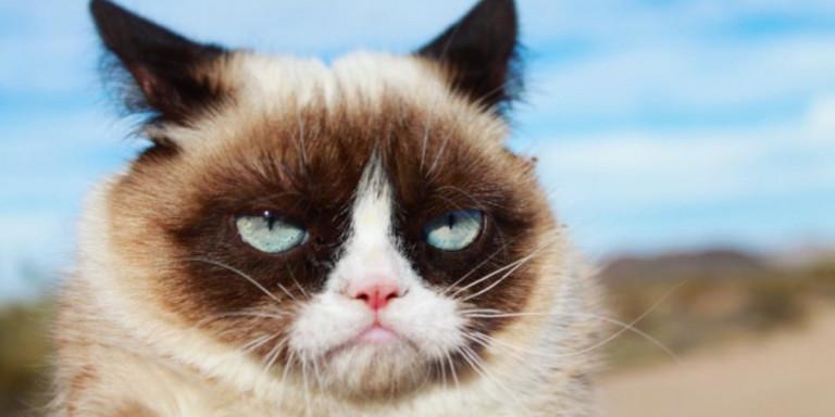 Η πρώτη και διάσημη Grumpy cat