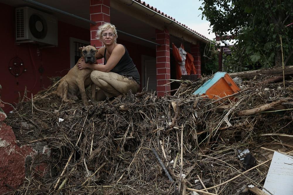 Γυναίκα παρηγορεί σκύλο σε βουνό από ξύλα