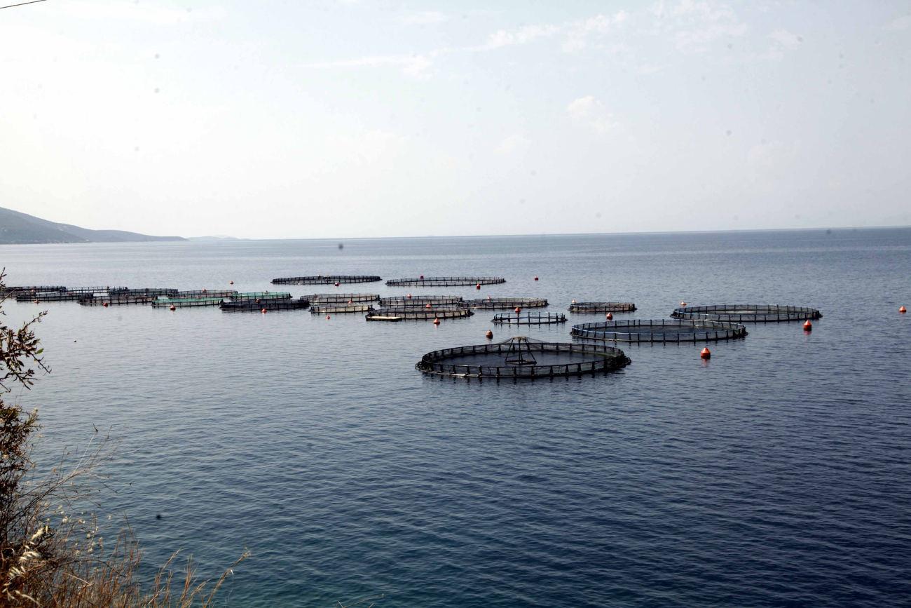 Κλουβιά στη θάλασσα όπου εκτρέφονται τσιπούρες και λαβράκια