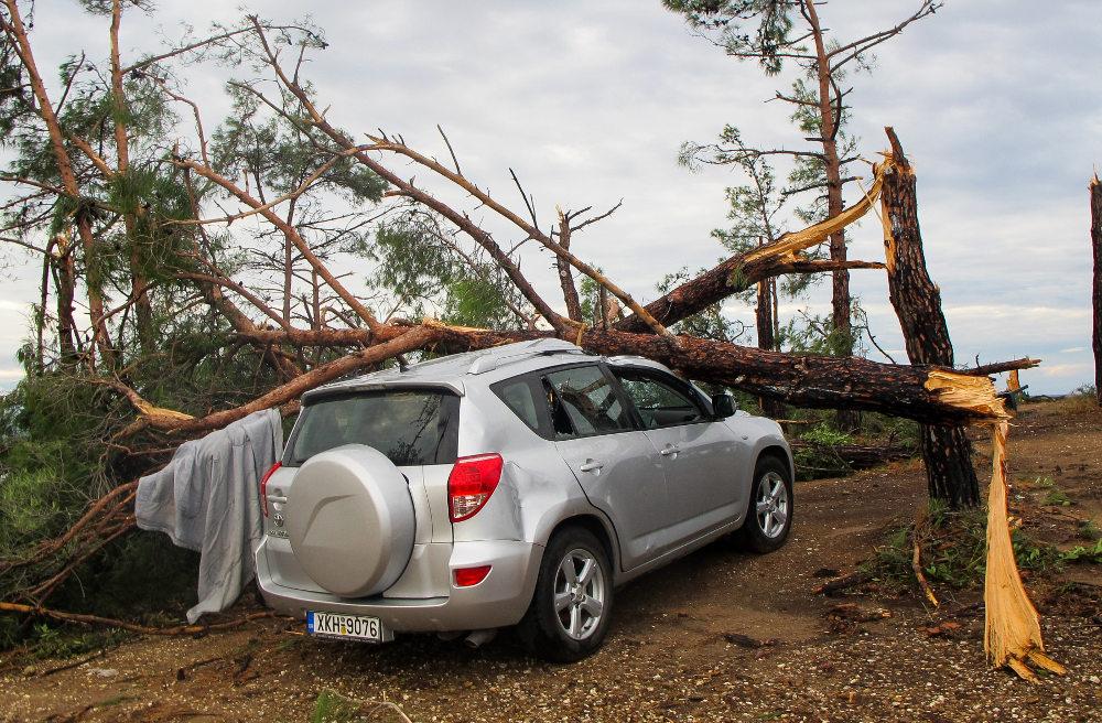 Δέντρο έσπασε και καταπλάκωσε αυτοκίνητο στη Χαλκιδική
