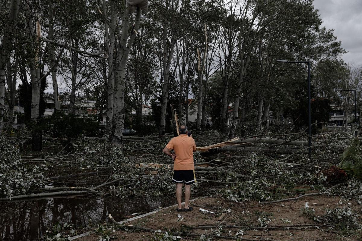Κλαδιά και ολόκληρα δέντρα έσπασαν το βράδυ της Τετάρτης στη Χαλκιδική