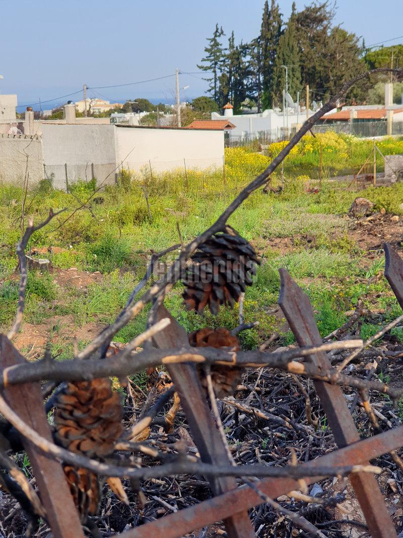 Καμμένα κλαδιά σε αγρό