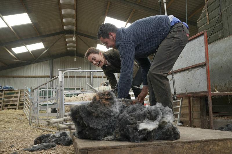 Η Κέιτ Μίντλετον κουρεύει πρόβατο