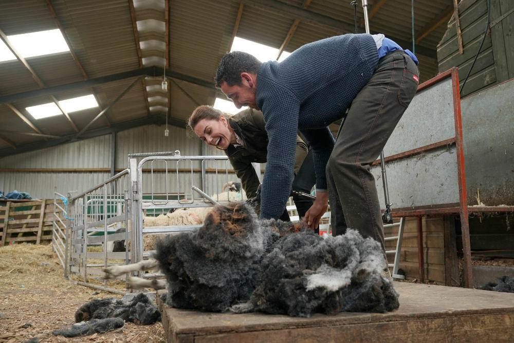 Η Κέιτ Μίντλετον κουρεύοντας πρόβατα
