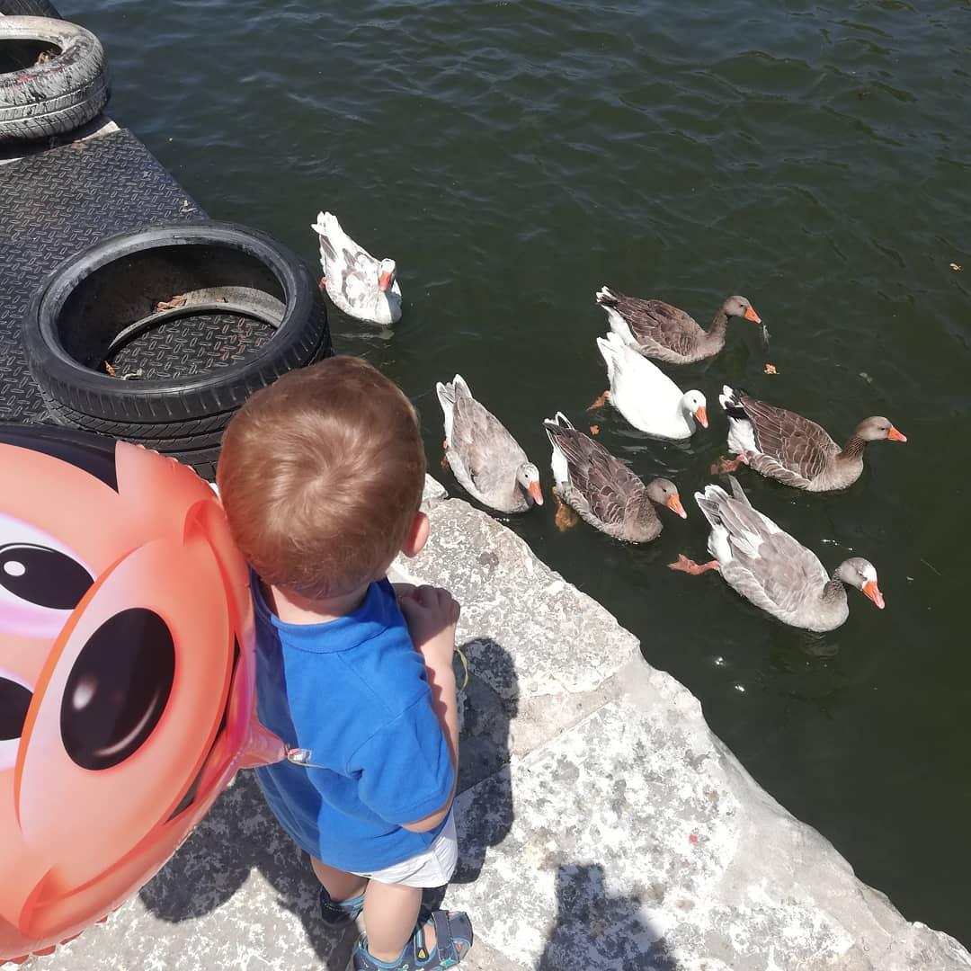 Φωτογραφία του γιου της Κατερίνας Μάρκου δίπλα στο νερό όπου κολυμπούν πάπιες