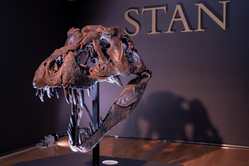 Το κεφάλι του τυραννόσαυρου Σταν