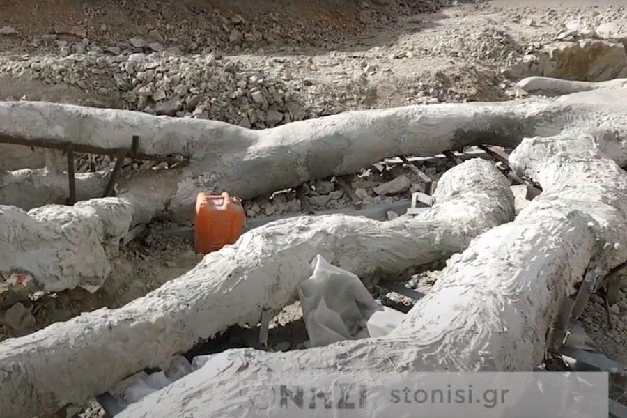 Μυτιλήνη: Εντοπίστηκε ακέραιο απολιθωμένο δένδρο με τα κλαδιά του -Ηλικίας 20.000.000 ετών [εικόνα]