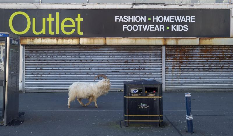 Ανενόχλητη η κατσίκα περιφέρεται στην αγορά της πόλης